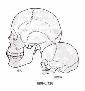 顎骨の成長