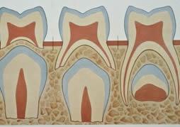 歯の生え方2