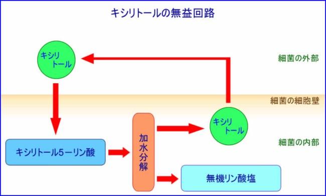 kisiri01.jpg